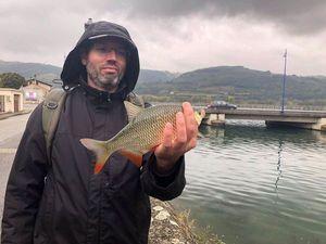 Rotengle (Gardon de Roche) — Fish & Fils