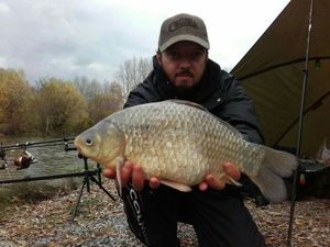 Crucian Carp — Laurent C