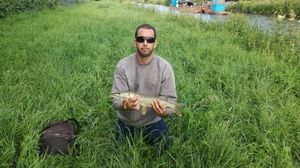 Northern Pike — Micka Girod