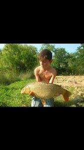 Common Carp — Leo Sgns