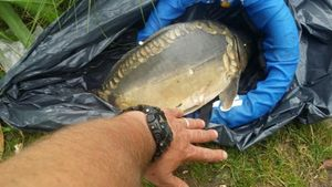 Mirror Carp — BBA PÊCHE FRANCE MATOS TEAM SPOTS