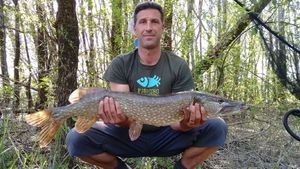 Northern Pike — Guillaume  POMMIER