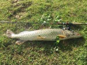 Northern Pike — Eric. Rico fishing Febvre
