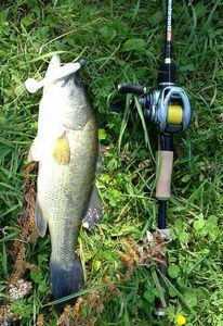 Largemouth Bass — Desmaris Julien
