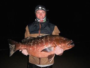 African Red Snapper — Christophe Marincovitch