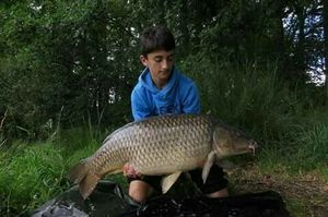 Common Carp — Ugo Bouard