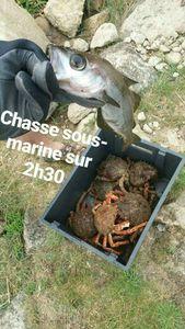Common Spider Crab — Maxime Gueguen