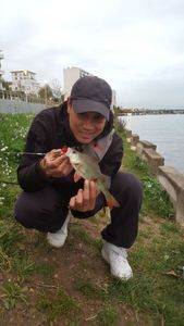 European Perch — Tony Sam