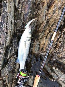 European Bass — Jean-ferreol Oilleau