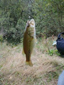 Largemouth Bass — Romu Romumu