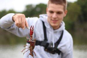 Spinycheek Crayfish — Axel Rauch