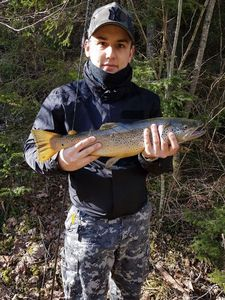 Brown Trout — Terry Sauvain