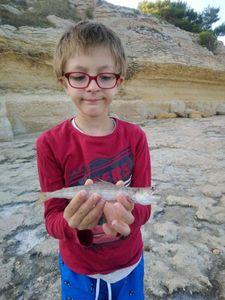 Atlantic Lizardfish — Kenzo et Denis Choquet