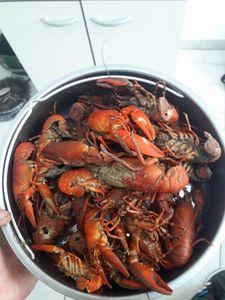Spinycheek Crayfish — Alexis Dauvergne