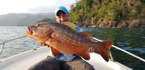 African Red Snapper — Yann Giulio