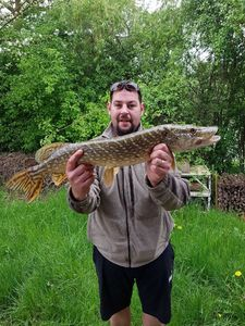 Northern Pike — Alain Farrugia