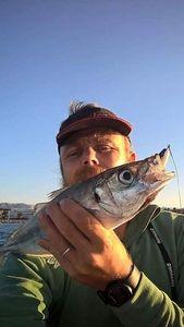 Mediterranean Horse Mackerel — Guillaume Mergan