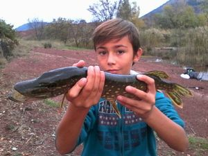 Northern Pike — Alexis et Florian