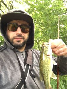 Largemouth Bass — fab boubou