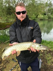 Northern Pike — Vin Cent