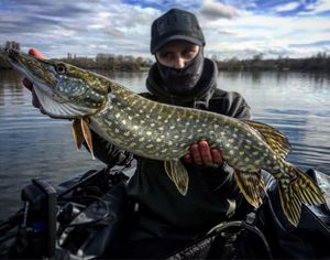 Northern Pike — Mik Lopez