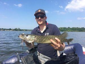 Northern Pike — Père et Fish
