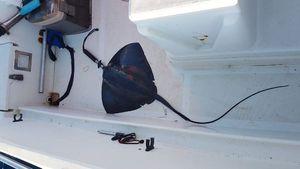 Common Stingray — Septi Pêche Méditerranée