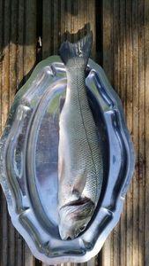 European Bass — Daniel Thomas