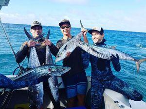 Narrowbarred Mackerel — Tom Legros