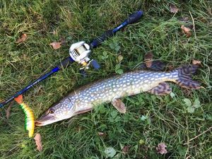Northern Pike — Quentin Giraud