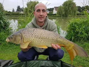 Common Carp — Cédric Vanacker