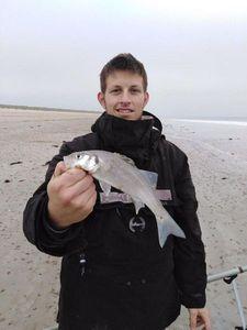 European Bass — Siméon Poirier
