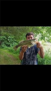 Largemouth Bass — Johan Calmels