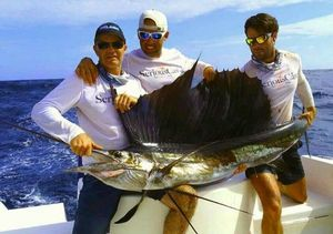 Pacific Sailfish — GUILLAUME Benoit