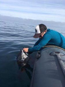 Bluefin Tuna — Mathieu Le Blanc