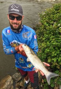 Thinlip Grey Mullet — Angler's Madness (Vincent _b)