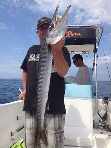 Great Barracuda — Christian Cano