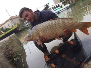 Common Carp — Thibault Gilbert