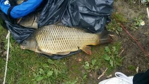 Common Carp — BBA PÊCHE FRANCE MATOS TEAM SPOTS