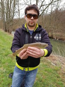 Brown Trout — Fabien Dovilliers