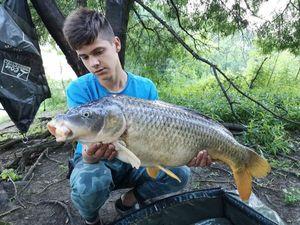 Common Carp — Kilian Priou