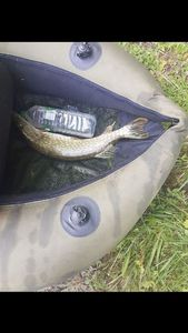 Northern Pike — Pike Ain