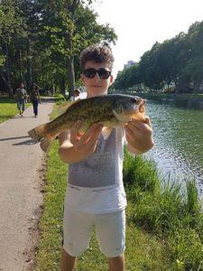 Largemouth Bass — Jonathan Lamy-Chappuis