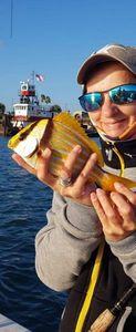 porkfish — Chrystel Kimmerling Maistrello
