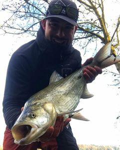 Asp — Angler's Madness (Vincent _b)
