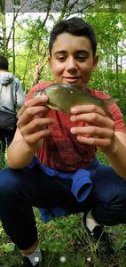 Common Bream — TIM FISH (Youtube)