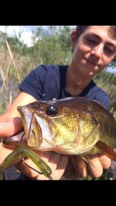 Largemouth Bass — Lucas Lalande