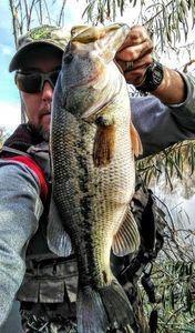 Largemouth Bass — Chad  Reznicek