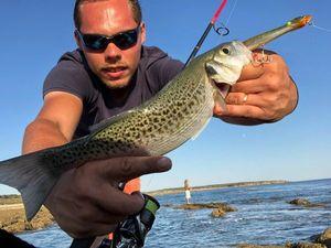Spotted Seabass — barloup fishing