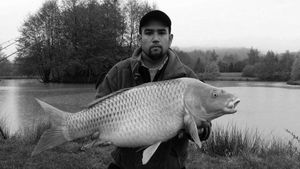 Common Carp — Mathias Delandre